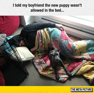 Tumblr, Blog, and Puppy: I told my boyfriend the new puppy wasn't  allowed in the bed..  THE META PICTURE awesomesthesia:  Not Allowed In The Bed