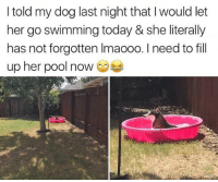 Memes, Butterfly, and Pool: I told my dog last night that I would let  her go swimming today & she literally  has not forgotten Imaooo. I need to fill  up her pool now Follow my other accounts @antisocialtv @lola_the_ladypug @x__antisocial_butterfly__x