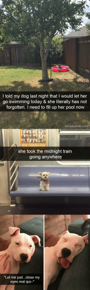 "Target, Tumblr, and Http: I told my dog last night that I would let her  go swimming today & she literally has not  forgotten. I need to fill up her pool now  boredpanda.com   NEW YORKERS KEEP  she took the midnight train  going anywhere  door   ""Let me just...close my  eyes real qui-"" Dog snapsvia @animalsnaps"