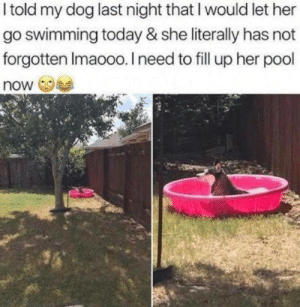 Dank, Pool, and Today: I told my dog last night that I would let her  go swimming today & she literally has not  forgotten Imaooo. I need to fill up her pool  now