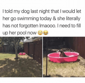 Dog Memes Of The Day 30 Pics – Ep53 #animalmemes #dogmemes #memes #dogs - Lovely Animals World: I told my dog last night that I would let  her go swimming today & she literally  has not forgotten Imaooo. I need to fill  up her pool now Dog Memes Of The Day 30 Pics – Ep53 #animalmemes #dogmemes #memes #dogs - Lovely Animals World