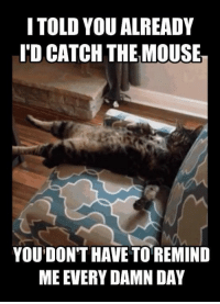 ipd: I TOLD YOU ALREADY  IPD CATCH THEMOUSE  YOU DON'T HAVE TO REMIND  MEEVERYDAMN DAY