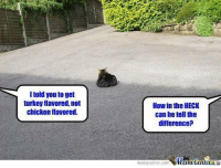 Memes, Chicken, and Turkey: I told you to get  turkey flavored, not  chicken flavored.  How in the HECK  can he tell the  difference?  memecenter.com MemeCentera