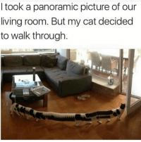 Living, Cat, and Picture: I took a panoramic picture of our  living room. But my cat decided  to walk through