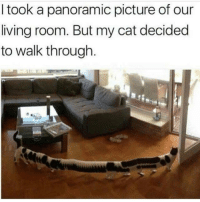 Living, Cat, and Picture: I took a panoramic picture of our  living room. But my cat decided  to walk through Ill just go over heerreee