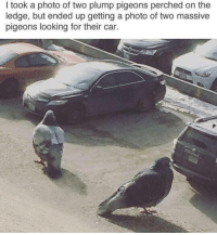 they want 20 loaves of bread or they gonna shit on your life: I took a photo of two plump pigeons perched on the  ledge, but ended up getting a photo of two massive  pigeons looking for their car. they want 20 loaves of bread or they gonna shit on your life