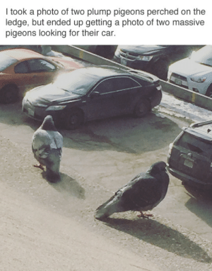 tastefullyoffensive:(via tastytalk): I took a photo of two plump pigeons perched on the  ledge, but ended up getting a photo of two massive  pigeons looking for their car. tastefullyoffensive:(via tastytalk)