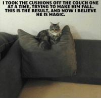 Fall, Couch, and Magic: I TOOK THE CUSHIONS OFF THE COUCH ONE  AT A TIME, TRYING TO MAKE HIM FALL.  THIS IS THE RESULT, AND NOW I BELIEVE  HE IS MAGIC.