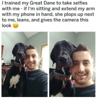 (@dogsbeingbasic) is my favorite doggo page on IG.: I trained my Great Dane to take selfies  with me - if I'm sitting and extend my arm  with my phone in hand, she plops up next  to me, leans, and gives the camera this  look (@dogsbeingbasic) is my favorite doggo page on IG.