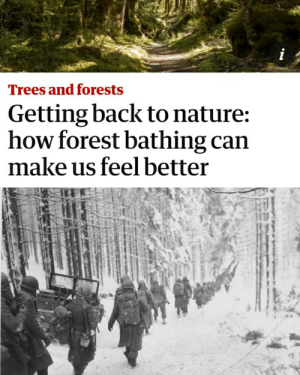 Just relax: i  Trees and forests  Getting back to nature:  how forest bathing can  make us feelbetter Just relax