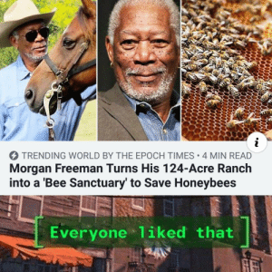 "I initially read this as ""Morgan Freeman turns 124"": i  TRENDING WORLD BY THE EPOCH TIMES 4 MIN READ  Morgan Freeman Turns His 124-Acre Ranch  into a 'Bee Sanctuary' to Save Honeybees  Everyone 1iked that I initially read this as ""Morgan Freeman turns 124"""