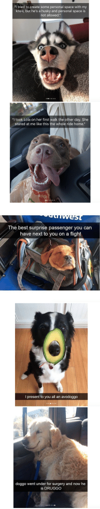 "<p>These cute dog snapchats will make your day<br/></p>: ""I tried to create some personal space with my  knee, but he's a husky and personal space is  not allowed.""   ""l took Lola on her first walk the other day. She  stared at me like this the whole ride home.""   The best surprise passenger you can  have next to you on a flight   o)  l present to you all an avodoggo   doggo went under for surgery and now he  is DRUGGO <p>These cute dog snapchats will make your day<br/></p>"