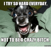 bitches: I TRY SO HARDEVERYDAY.  NOT TO BEA CRAZY BITCH.  memes Com