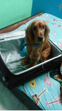 I unpacked my stuff and my dog thought I was gonna leave her alone again.: I unpacked my stuff and my dog thought I was gonna leave her alone again.