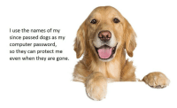"Dogs, Computer, and Good: I use the names of my  since passed dogs as my  computer password,  so  they can protect me  even when they are gone. <p>Good boys make good protectors. via /r/wholesomememes <a href=""https://ift.tt/2l4wz0V"">https://ift.tt/2l4wz0V</a></p>"