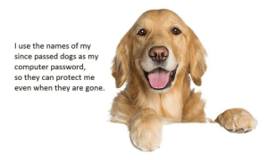 Dogs, Memes, and Tumblr: I use the names of my  since passed dogs as my  computer password,  so they can protect me  even when they are gone. positive-memes:  Good boys make good protectors.
