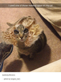 Dank, Apps, and Tangled: I used one of those makeup apps on my cat  tastefully offensive:  (photo by tangled hair)