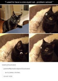 """crying cat: """"I used to have a one-eyed cat...problem solved.""""  batahoy Deactivated  paintmefiftyshadesofgreenDeactivated  IM FUCKING CRYING  OH MY GOD"""