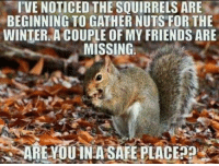 #BigDaddy #dafuqfunnies: I VE NOTICED THE SQUIRRELS ARE  BEGINNING TO GATHER NUTS FOR THE  WINTER A COUPLE OF MY FRIENDS ARE  MISSING  ARE YOU IN A SAFE PLACE p #BigDaddy #dafuqfunnies