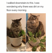 Funny, Shit, and Ted: I walked downstairs to this. I was  wondering why there was dirt on my  floor every morning I shit on your plant hooman (@hilarious.ted)