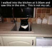 We Know Meme: I walked into the kitchen at 5:30am and  saw this in the sink... This is not my cat..  SUGAR  We Know Memes