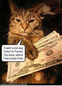 We interrupt the Black Cat Ball Auction to bring mew #TunaTuesday!: I want a one-way  ticket to Tunisia,  You know, where  Tune comes from We interrupt the Black Cat Ball Auction to bring mew #TunaTuesday!