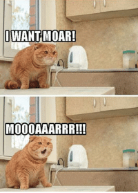 Cats, Desperate, and Life: I WANT MOAR!  MOOOAAARRR!!! The look on the face of this cat is far too accurate given the desperate nature of this situation, one we all know far too well I'm sure.