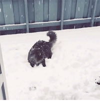 I want the cat on my snow ball fight team. celebritypetworth cats snow snowy snowycat funny catvideo giphy catlovers: I want the cat on my snow ball fight team. celebritypetworth cats snow snowy snowycat funny catvideo giphy catlovers