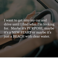 Cars, Dank, and Driving: I want to get into my car and  drive until I find what I'm looking  for. Maybe it's PURPOSE, may be  it's a NEW START or maybe it's  just a BEACH with clear water.