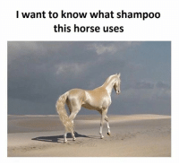 Horse Meme: I want to know what shampoo  this horse uses