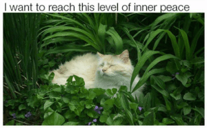 Memes, Peace, and 🤖: I want to reach this level of inner peace