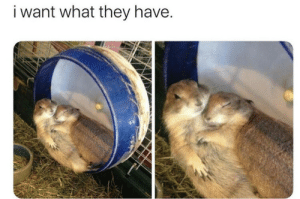 Man these two are so cute together, I wish I could be like them!!! via /r/wholesomememes https://ift.tt/2BHog3b: i want what they have. Man these two are so cute together, I wish I could be like them!!! via /r/wholesomememes https://ift.tt/2BHog3b