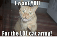 Uncle Sam has returned! In cat form!: I want YOU  For the LOL cat army! Uncle Sam has returned! In cat form!