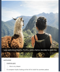 machu picchu: I was admiring Machu Picchu and a llama decided to join me.  extrOverted  this is my dream  It's emperor kuzko looking at the hill to build his summer palace