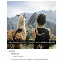 good morning 🌸🌸: I was admiring Machu Picchu and a llama decided to join me.  extrOverted  madame-gan  this is my dream  It's emperor kuzko looking at the hill to build his summer palace good morning 🌸🌸