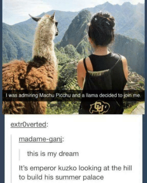 wrong leveromg-humor.tumblr.com: I was admiring Machu Picchu and a llama decided to join me.  extroverted:  madame-ganj:  this is my dream  It's emperor kuzko looking at the hill  to build his summer palace wrong leveromg-humor.tumblr.com