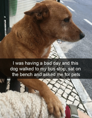 Bad, Bad Day, and Pets: I was having a bad day and this  dog walked to my bus stop, sat on  the bench and asked me for pets They always cheer us up
