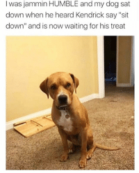 "Funny, Good, and Humble: I was jammin HUMBLE and my dog sat  down when he heard Kendrick say ""sit  down"" and is now waiting for his treat Good boy"