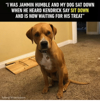 """9gag, Memes, and Twitter: """"I WAS JAMMIN HUMBLE AND MYDOG SAT DOWN  WHEN HE HEARD KENDRICK SAY SIT DOWN  AND IS NOW WAITING FOR HIS TREAT""""  witterOTHEdanmanteach He has loyalty in his DNA. Follow @9gag - - 📸THEdanmanleach Twitter - 9gag humble goodboy kendricklamar"""