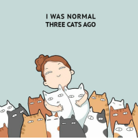 Cats, Crazy, and Target: I WAS NORMAL  THREE CATS AGO A Gift Guide for Crazy Cat Ladies