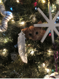 Christmas, Time, and Cat