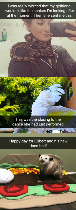 Target, Tumblr, and Animal: I was really worried that my girlfriend  wouldn't like the snakes I'm looking after  at the moment. Then she sent me this   This was the closing to the  dance she had just performed   Happy day for Gilbert and his new  taco bed! animalsnaps:Animal snaps