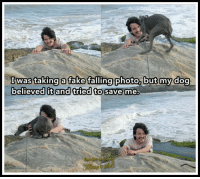 EpicLOL.com: I was taking a fake falling photo, but my dog  believed it and tried to save me, EpicLOL.com