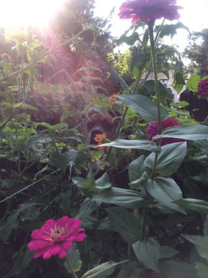 I was taking a picture of my flower garden and suddenly saw something move, was my neighbors dog Ace photobombing! It's one of my favorite pictures. 😀: I was taking a picture of my flower garden and suddenly saw something move, was my neighbors dog Ace photobombing! It's one of my favorite pictures. 😀