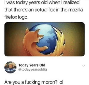 Dank, Fucking, and Lol: I was today years old when i realized  that there's an actual fox in the mozilla  firefox logo  Today Years Old  @todayyearsoldig  Are you a fucking moron? lol It is called fireFOX by HauntingIce MORE MEMES