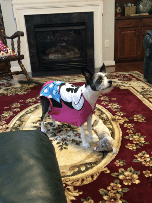 Clothes, Dogs, and Jenna Marbles: I was watching Jenna Marbles treat her dogs like babies with my mom. She said dressing up dogs is stupid before excusing herself to take care of something important. A few minutes later my dog runs by wearing one of her old shirts pinned to imitate baby clothes.