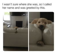 Memes, Reddit, and 🤖: I wasn't sure where she was, so | called  her name and was greeted by this. Cozy as HECC 🤤😍😂 (📷: Reddit u-SSuperM)
