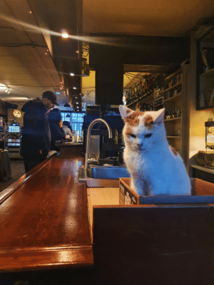 I went to a grunge bar in Amsterdam and found this guy just sitting in a rage: I went to a grunge bar in Amsterdam and found this guy just sitting in a rage