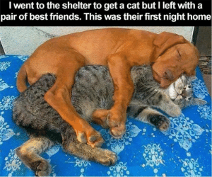 Friends, Memes, and Best: I went to the shelter to get a cat but I left with a  pair of best friends. This was their first night home <3