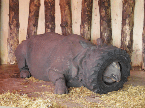 Zoo, Rhino, and Tired: I went to the zoo but the Rhino was tired.